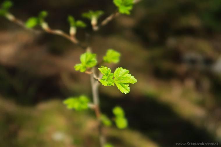 smä gröna blad på en gren