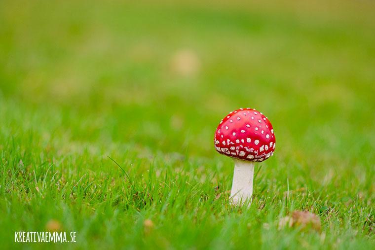 flugsvamp i gräs